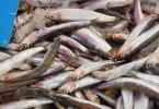 ueberfischung tierschutz was wir aus dem meer essen duerfen nachhaltigkeit