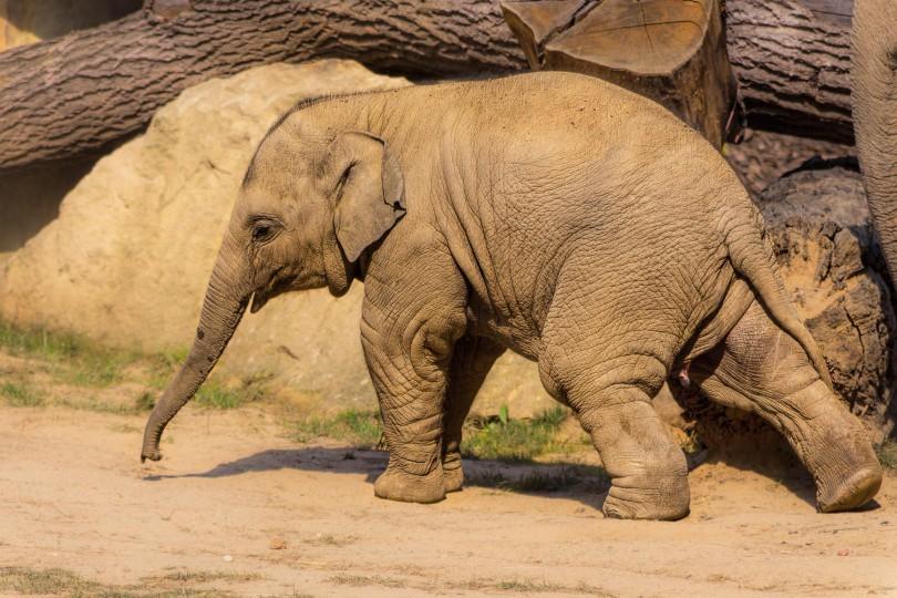 wilderei elfenbein jagd bedroht elefanten infografik. Black Bedroom Furniture Sets. Home Design Ideas