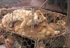 tierschutz nachhaltigkeit pelze Hunde-Katzen-Pelz-China-08-c-PETA-D-Karremann