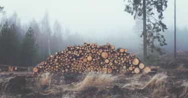 geschichte des baums umweltschutz nachhaltigkeit