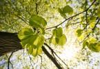 papierverbrauch wald naturschutz nachhaltigkeit