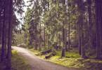 aufforstung bergwald projekt nachhaltigkeit