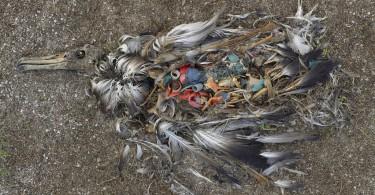 Albatros Plastik von Chris Jordan