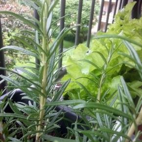 balkongarten-pflanzen-bio-nachhaltig-leben