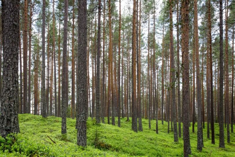 Trees_Jon Ottosson