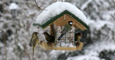 Vogel-fuettern-Winter_LBV_Ingo_Rittscher