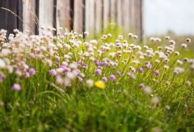 naturgarten naturschutz garten gestalten nachhaltigkeit