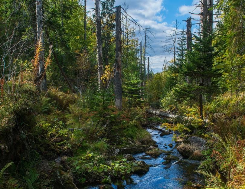 17 Wildnisgebiete In Deutschland