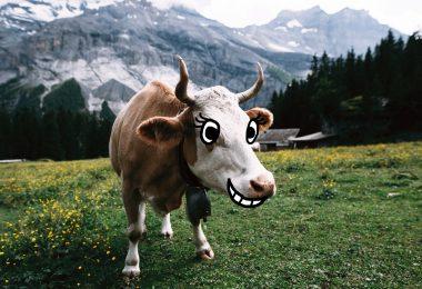 Nachhaltigkeit Kuh Kommentar nachhaltiger Lebensstil