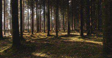 Holz von Hier Label nachhaltige Holzverarbeitung