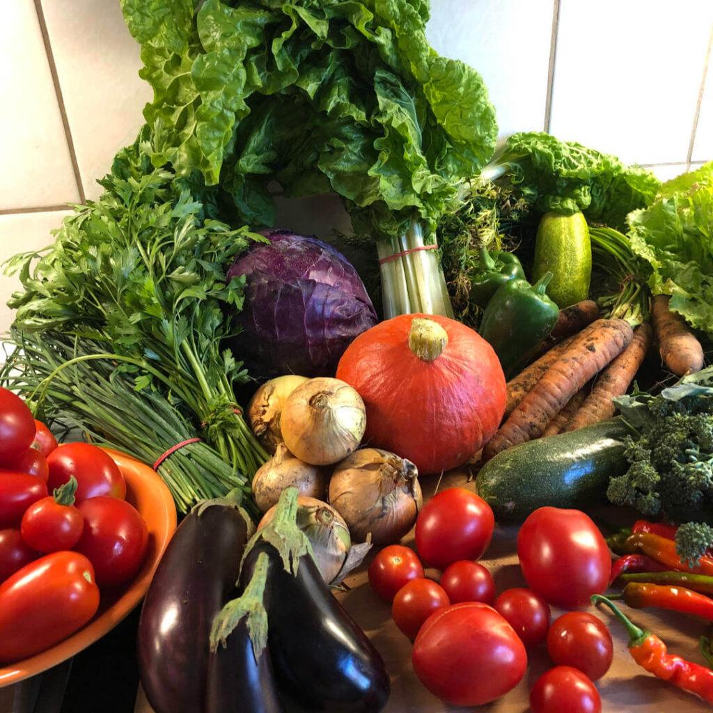 Solawi solidarische Landwirtschaft Ernte