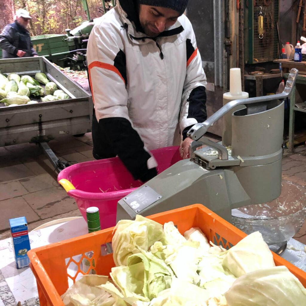 Solawi Sauerkraut machen Nachhaltigkeit