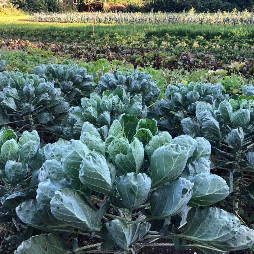 Solawi Gemüse Acker Nachhaltigkeit