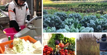 Solawi Solidarische Landwirtschaft Erklärung Erfahrungsbericht